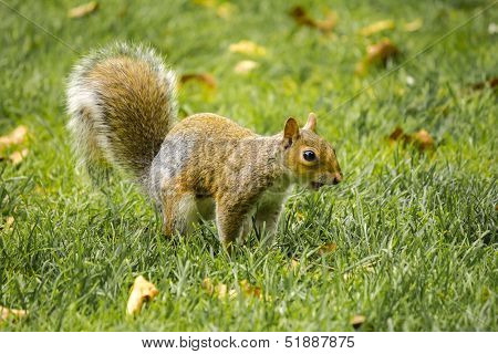 Squirrel on all four legs