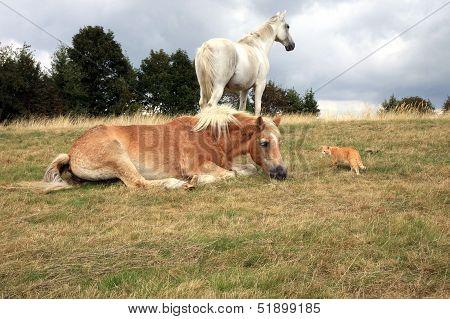 Cat and horses