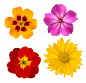 Big Set Of Beautiful Colorful Flowers. Design Flower Set. Vector Illustration.