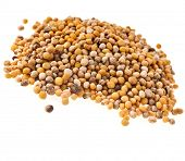 Mustard seeds heap pile isolated on white background