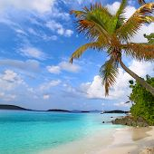 stock photo of virgin  - Palm tree over the beach of Saint John in the US Virgin Islands - JPG