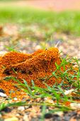 picture of fire ant  - Ants nest with green grass in the nature - JPG