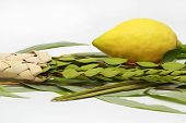 image of sukkoth  - Etrog (citron fruit) hadass (myrtle branches) Lulav (Date palm tree branch) and Aravah (Willow) Used in a ceremony of the Jewish holiday of Sukkoth. Isolated on white.