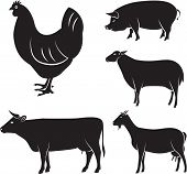 stock photo of chickens  - vector set of farm animals chicken cow sheep goat pig - JPG