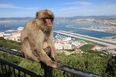 image of gibraltar  - Gibraltar Ape and Airport runway and Spain - JPG