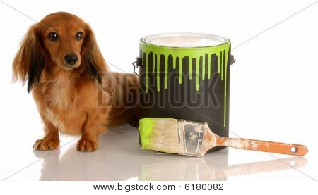 Dachshund With Paint Can