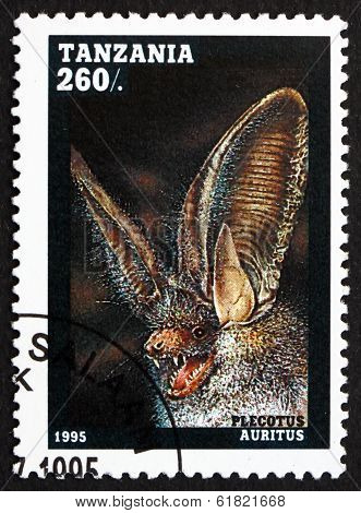 Postage Stamp Tanzania 1995 Common Long-eared Bat