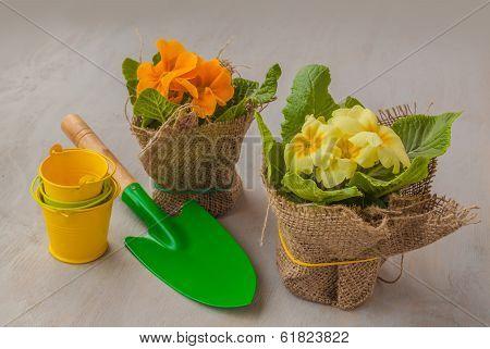 Yellow Primrose Small Shovel And Decorative Bucket