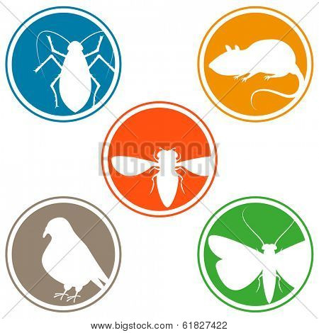 Pest icon collection