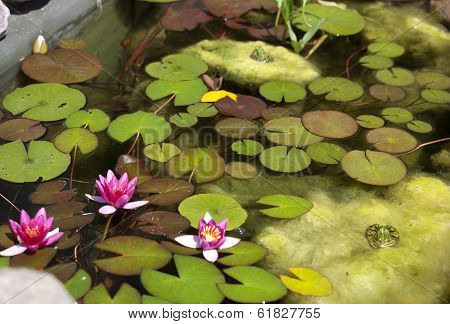 Smaller Plants Pond