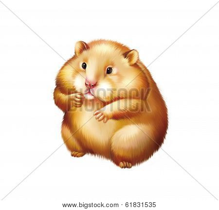 Cute red Hamster sitting Isolated on white