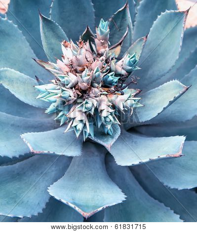 Macro of succulent plant in the desert