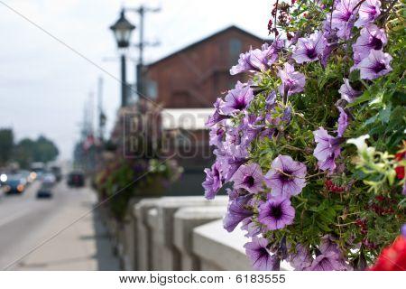 Hanging Flower Basket On A Bridge