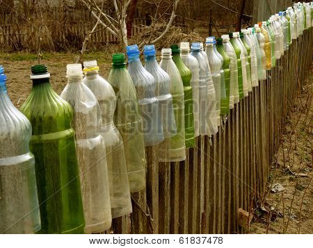 garden fence with plastic bottles which used to protect tomato seedlings from cold spring  weather as small hotbeds