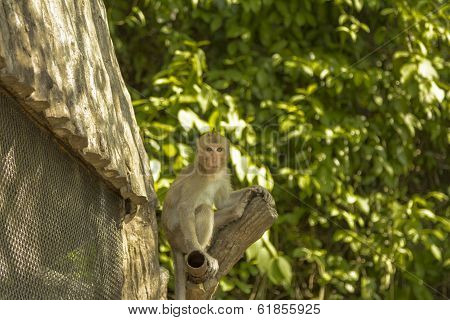 Tailand.Pattayya.Zoopark.