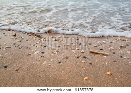 Sea Waves On Sand Beach With Mollisk Shells