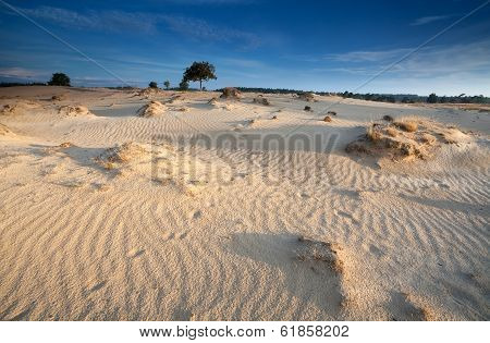 Morning Sunlight Over Sand Dunes