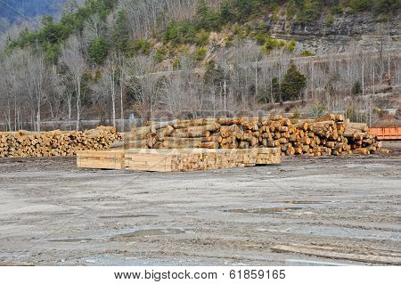 Sawmill Operation