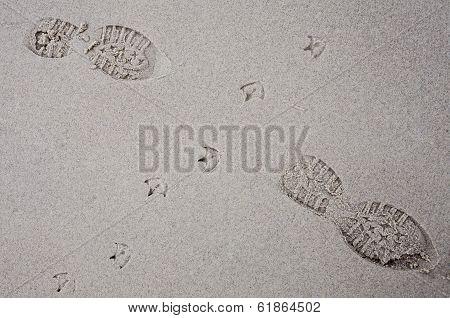 Bird Tracks In Sand Of A Beach Crossing Human Footprints.
