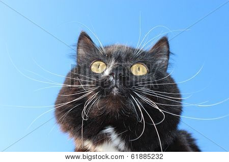 black cat with white tie on blue sky background