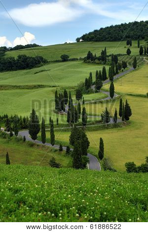 Curvy Road With Cypress Trees In Tuscany
