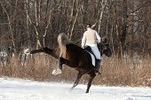 stock photo of horses ass  - Young woman riding obstinate horse through woodland - JPG