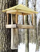 stock photo of trough  - Wooden trough for feeding birds in winter nailed to a tree in the forest - JPG