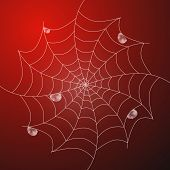 picture of cobweb  - Abstract Vector White Cobweb With Rain Drops on Red Background - JPG