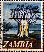ZAMBIA - CIRCA 1967: A stamp printed in Zambia shows Baobab circa 1967
