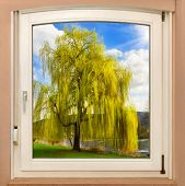 stock photo of glorious  - The view through a window revealing a beautiful tree on a glorious sunny spring day - JPG