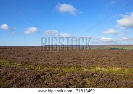 Scenic Moorland