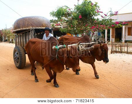 Wagon, Transport At Vietnam Countryside