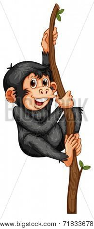 Illustration of a chimpanzee hanging on a vine