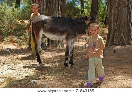 Local Children With Donkey , Turkey