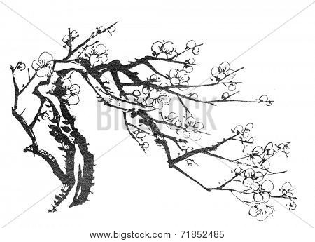 Chinese painting of flowers, plum blossom, on white background.