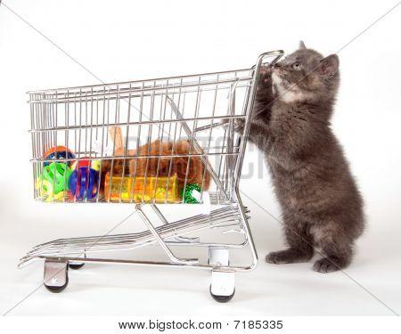 Cute Gray Kitten Pushing Shopping Cart