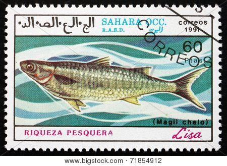 Postage Stamp Sahara 1991 Grey Mullet, Liza