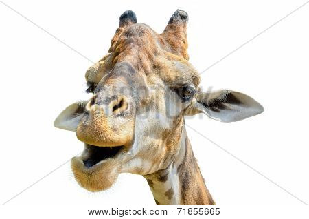 Giraffe (giraffa Camelopardalis) Isolated On White
