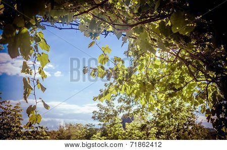 Grape Branch