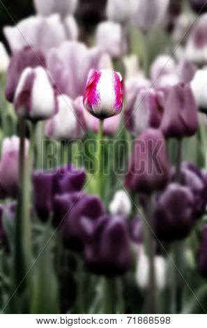 Tulip garden with variety of freshly grown flowers and greenery
