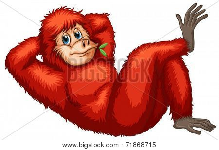 Illustration of a closeup orangutan