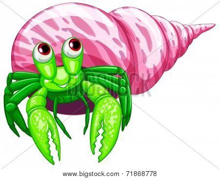 Illustraion of a single hermit crab