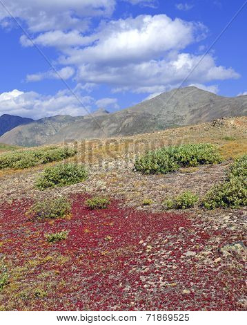 Autumn colors in alpine tundra, rocky mountains USA