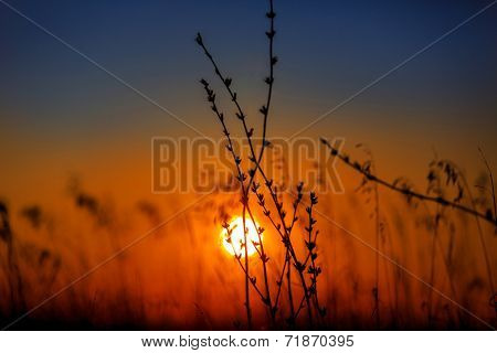 Dry grass on sunset background