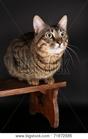 Grey cat on wooden stool on dark background