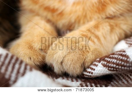 Red cat's paws on blanket closeup