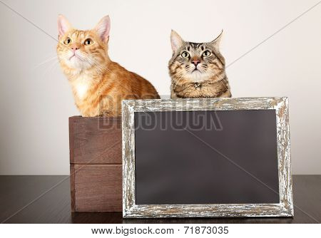 Two cats in wooden box and blackboard on table isolated on white