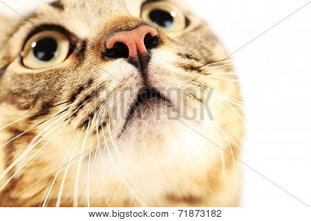 Cat's muzzle closeup
