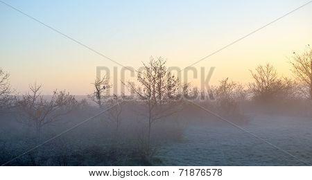 Single Bird Silhouette Dawn