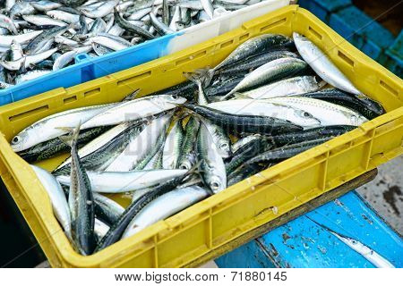 Crate Fresh Fish On The Market